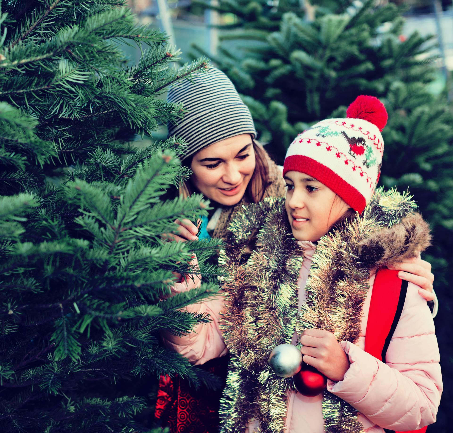 Drvce može izazvati alergijsku reakciju na koži i teže disanje