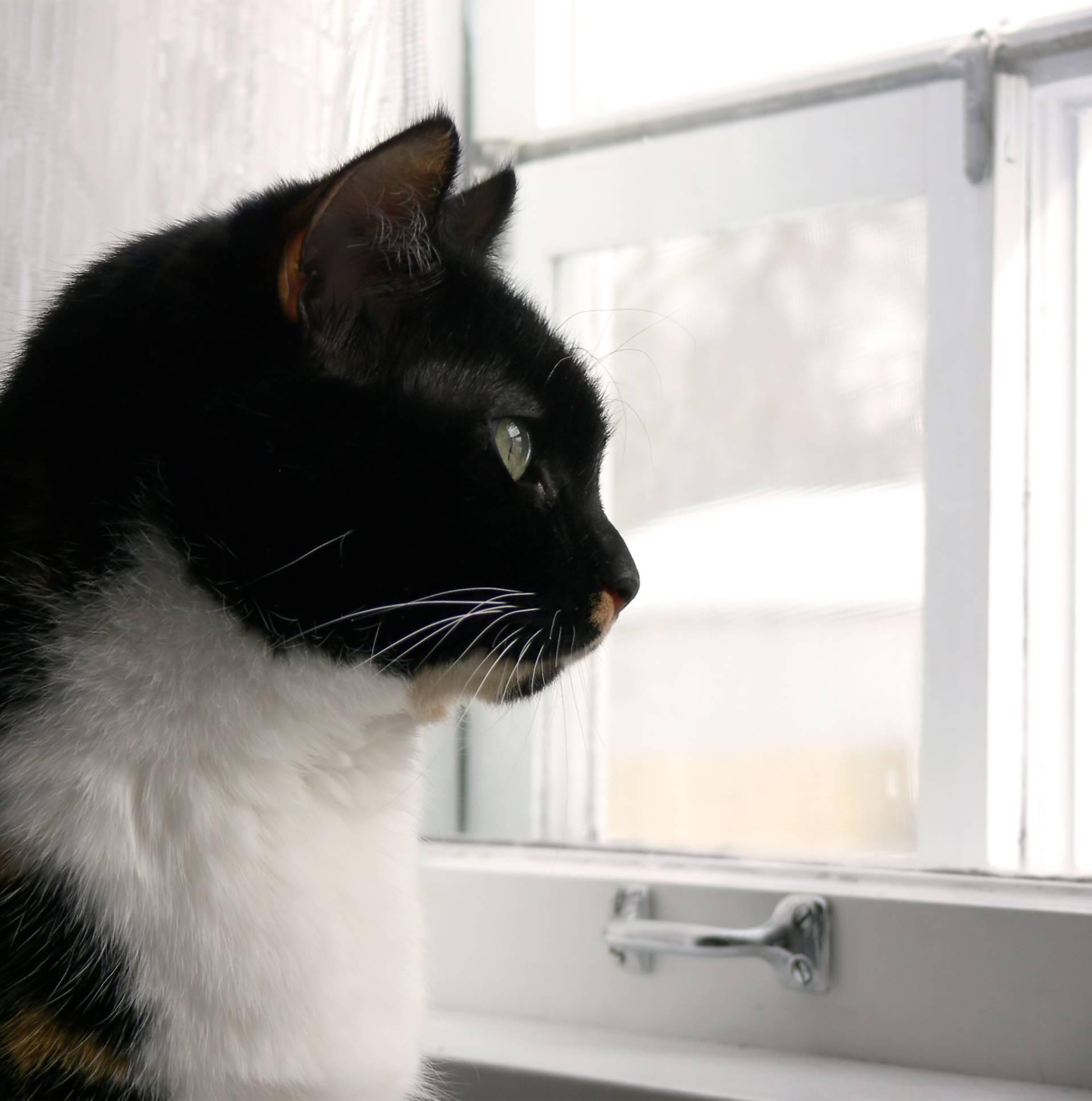 Mačke znaju kada su zli duhovi u kući i upozoravaju vas na to