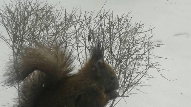 Nahranila je vjevericu i sad joj svakoga dana dolazi na prozor