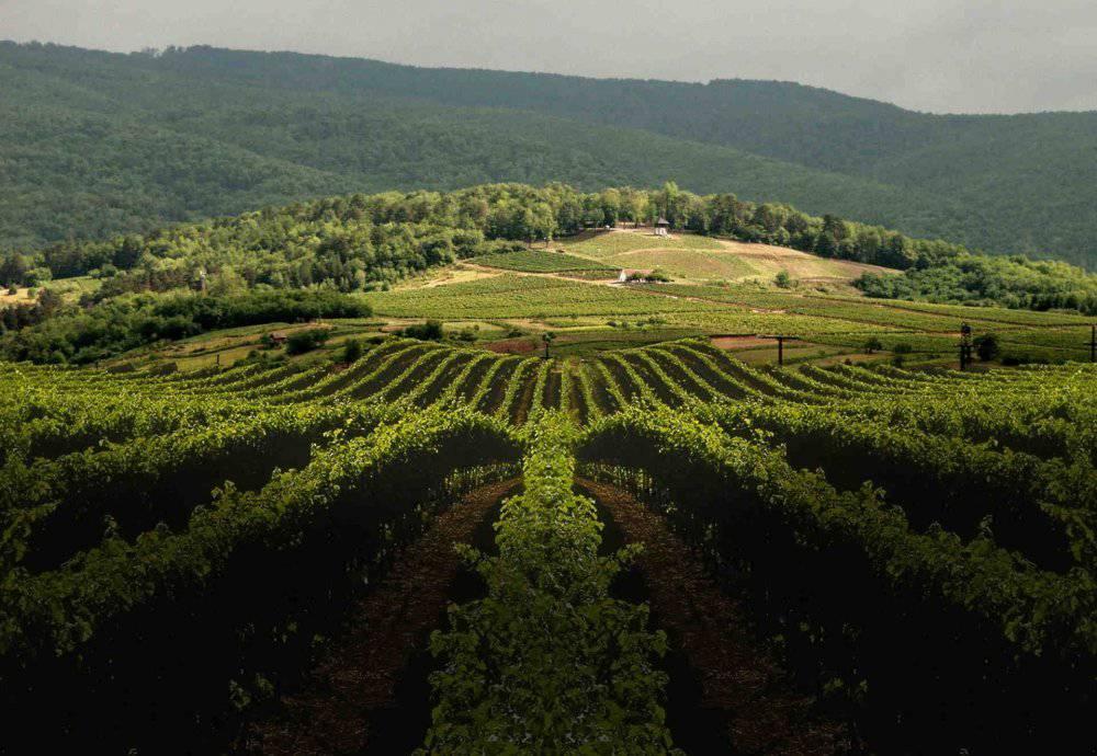 Maximo linija vina iz Kutjevačkog podruma
