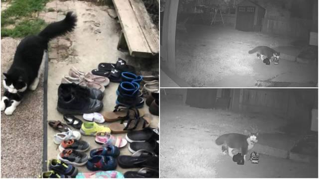 Ovaj mačak po susjedstvu krade obuću, u impresivnoj kolekciji već ima oko 50 pari cipela