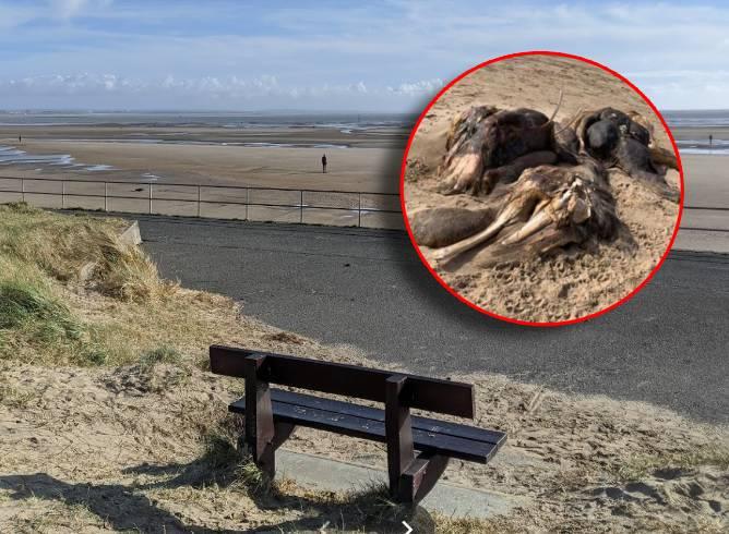More je na plažu izbacilo čudno biće: Izgleda poput kita koji je pojeo konja koji je pojeo dupina