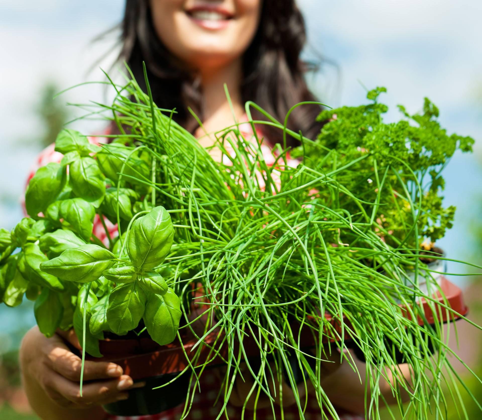 Za uzgoj zdrave hrane dovoljan vam je sunčani balkon ili terasa