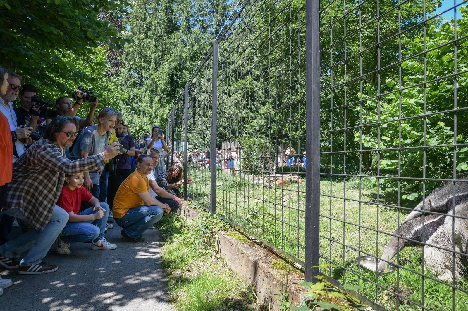 Zagreb: Smogovci dali ime divovskom mravojedu, zvat će se Nosonja