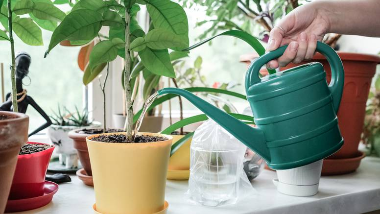 U ovo vrijeme mnogi rade ovu pogrešku sa svojim biljkama, nemojte da se to i vama dogodi