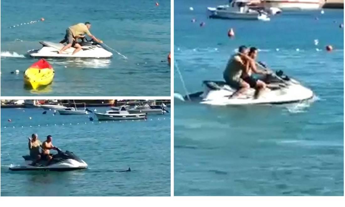 Lov na morsku neman: Dvojac  je harpunom ubadao modrulja
