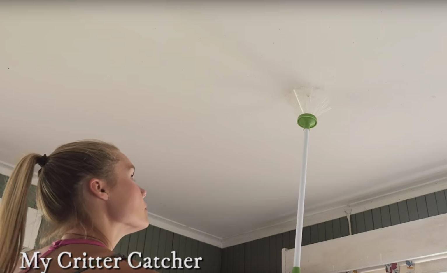 Lovac na pauke: Ova hvataljka bezbolno lovi kukce i pauke