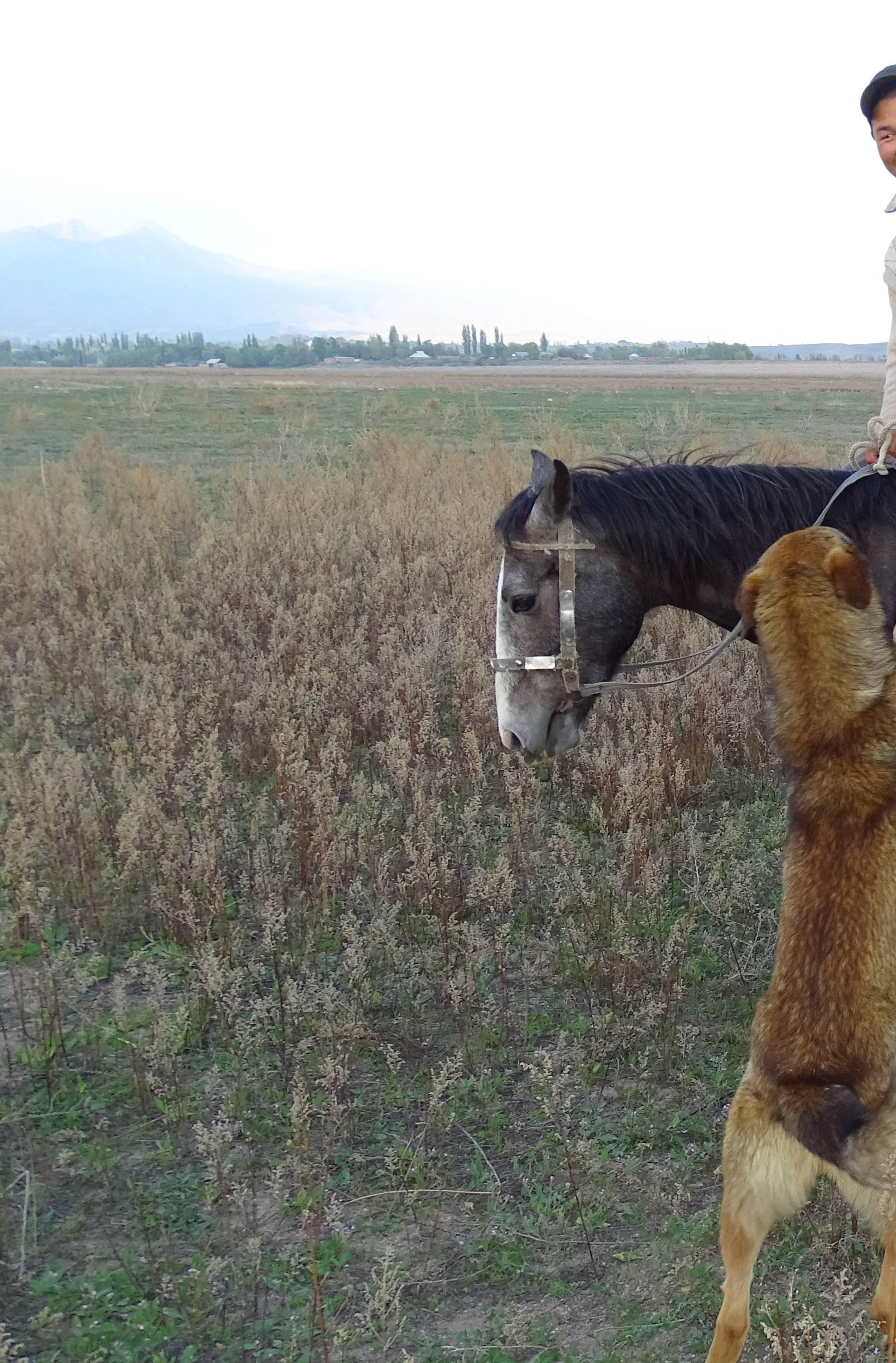 'Na Aljaski sam sreo ogromnog grizlija, nije mi bilo svejedno'