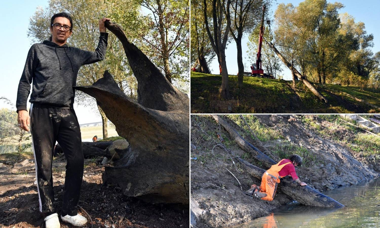 Crno zlato u Savi: 'Iz rijeke vadimo stabla starija od Isusa'