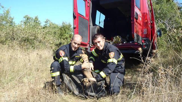 Spasili pse od smrti u jami iz pakla, jednoga su već udomili