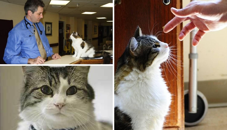 Mačak Oscar po mirisu osjeti da će netko umrijeti vrlo brzo