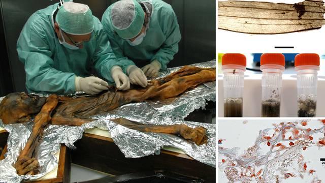 Otzijev posljednji obrok: Jelen i kozorog bili su užasnog okusa