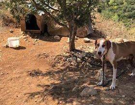Užas na Lastovu: Psa su vezali za drvo i ostavili ga bez vode