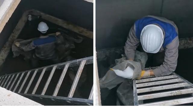Škverani spasili galeba koji je upao u betonsku komoru i nije znao izaći - nazvali ga Škverko