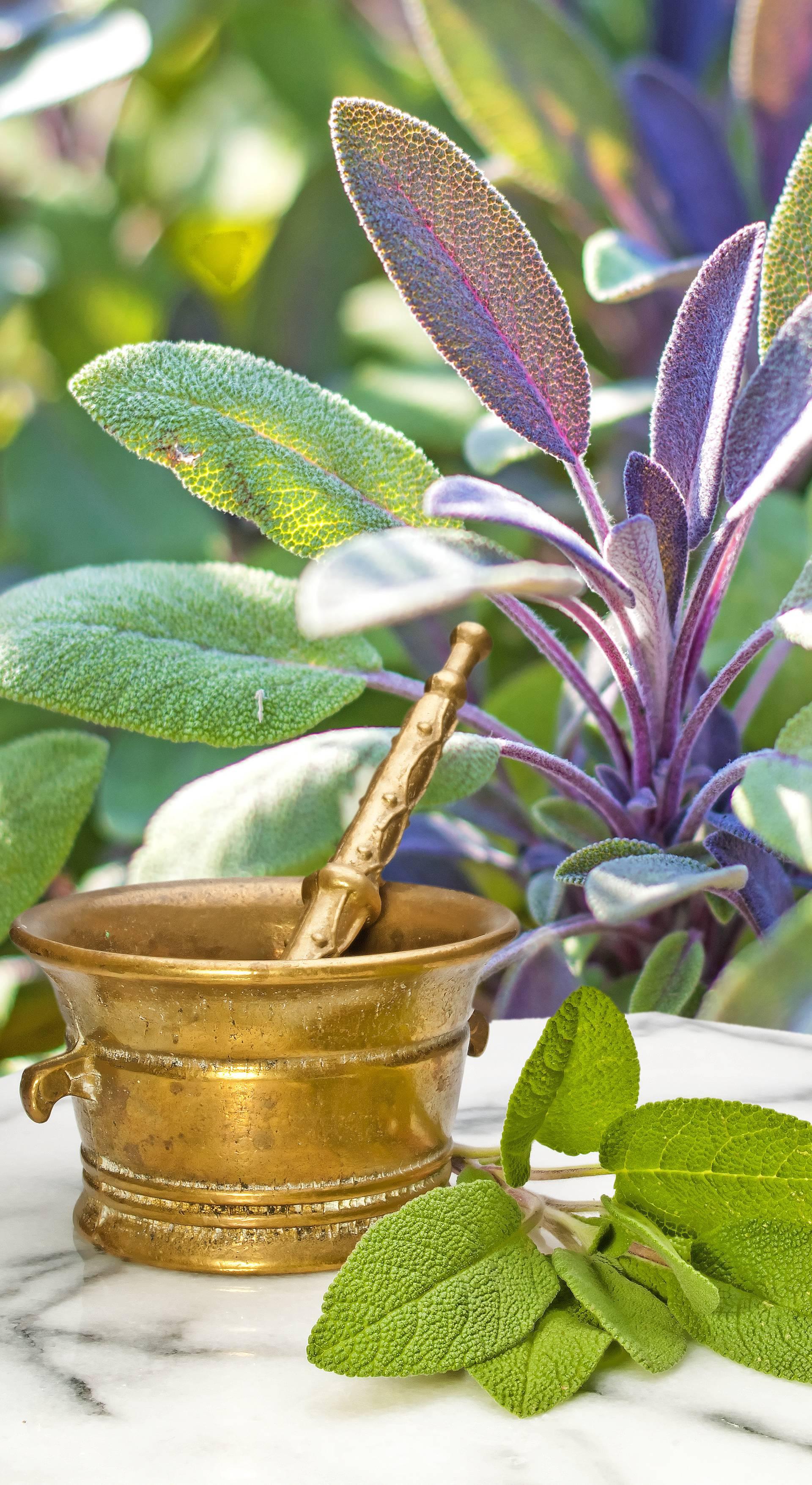 Za lakše začeće žene: Biljkama iz vrta si povećajte plodnost
