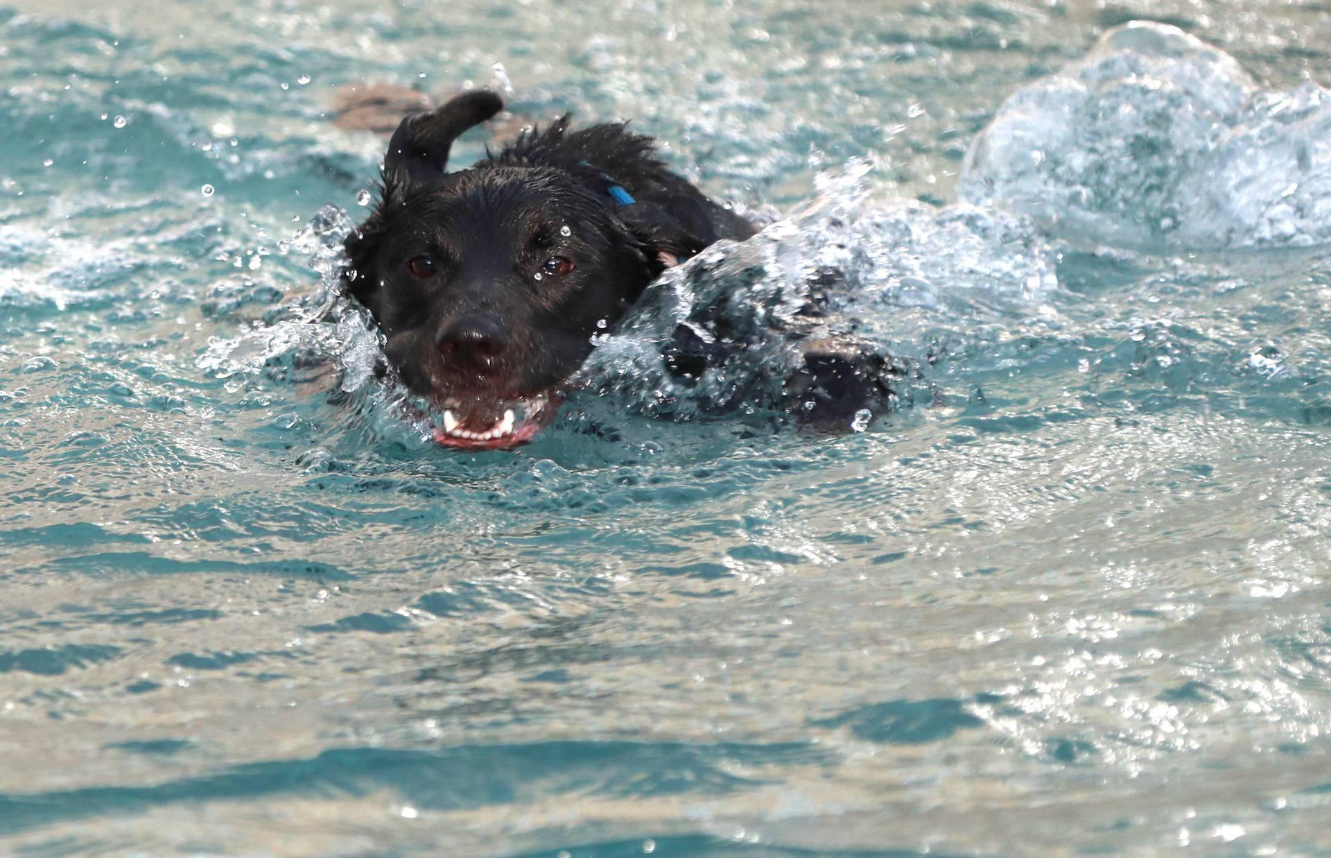 Pas se kupao u fontani usred Zagreba i nije mu se žurilo izaći