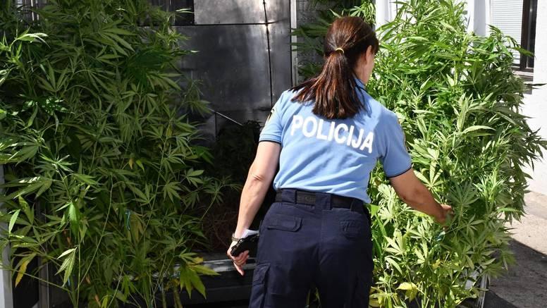 Kad tad i u Hrvatskoj odlučivat će se o legalizaciji marihuane