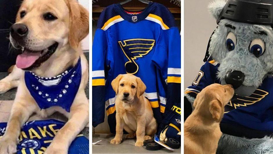 Psić ima svoj ured, smije ući u svlačionicu i obožava hokej...