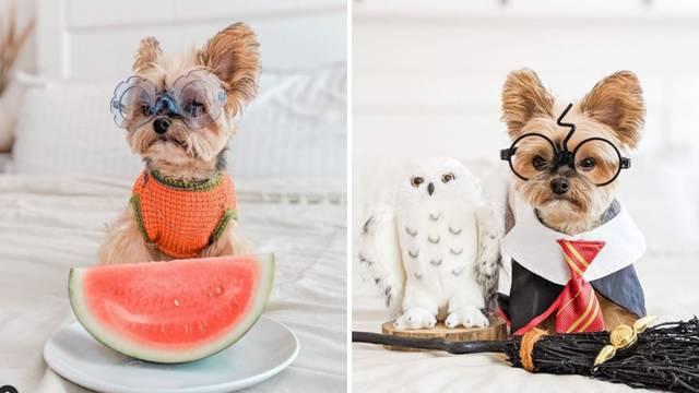 Odijeva svog psa u poznate i filmske likove: Njegova videa imaju više od milijun pregleda