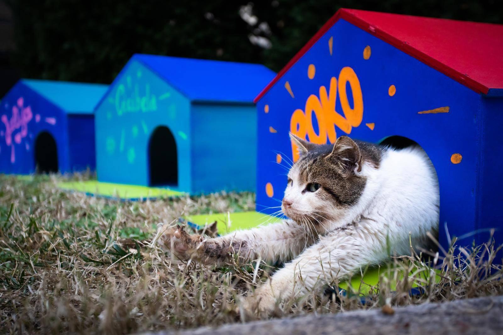 Dom za mace s kazalisne pjace