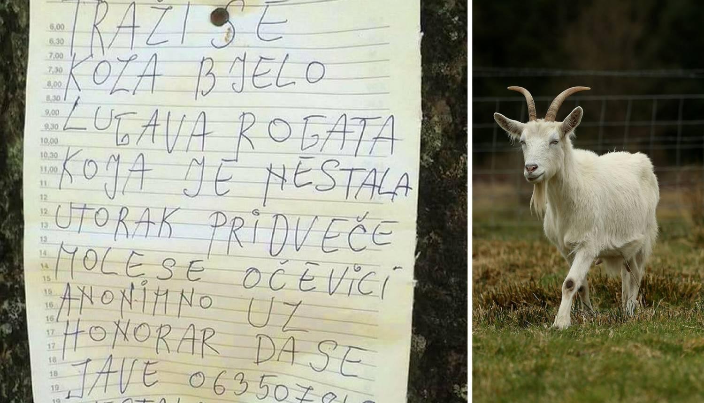 Muškarcu iz BiH nestala koza: Očevici, javite se, dajem novac!