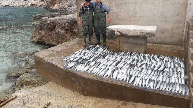 Krenulo ga: Ulovio je 680 riba! Sebi ostavio 4, sve je podijelio