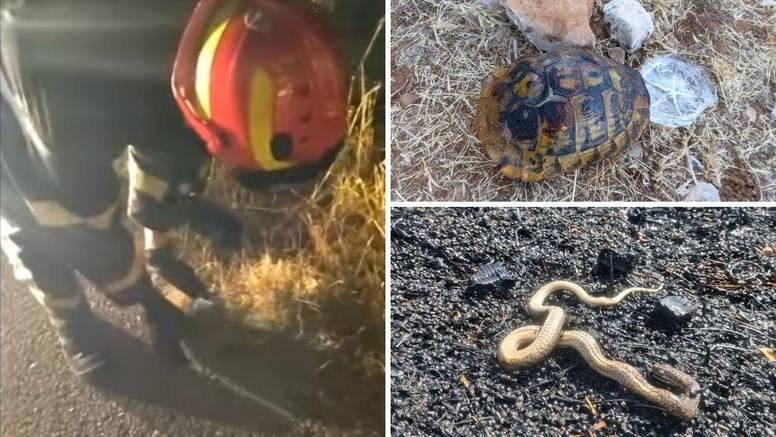 VIDEO Drniški vatrogasci spasili ježa od sigurne smrti u požaru