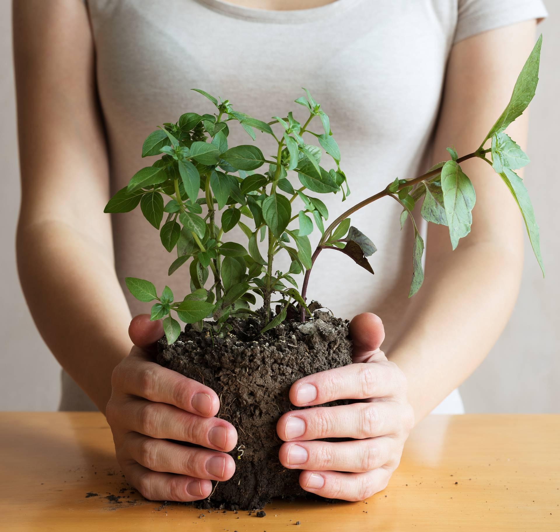 5 sobnih biljaka koje će vam pročistiti zrak u kući od otrova
