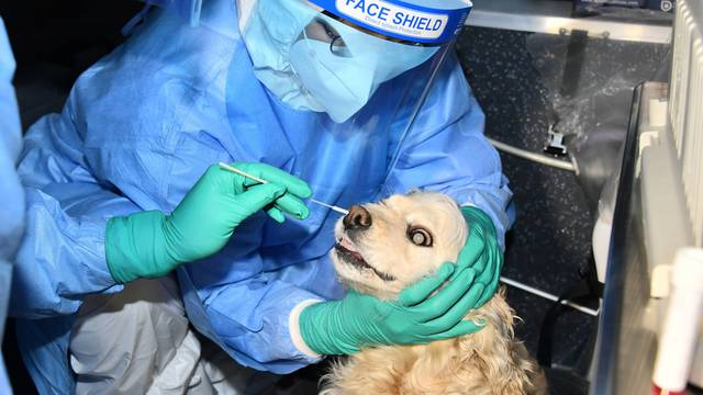 A person wearing personal protective equipment (PPE) holds a dog which has a swab sample taken for a coronavirus disease (COVID-19) test in Seoul