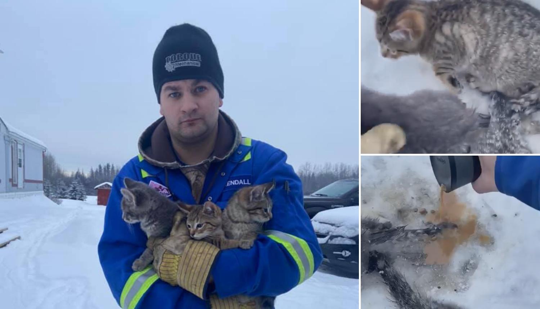 Polio vrućom kavom mačiće i tako ih spasio od smrzavanja