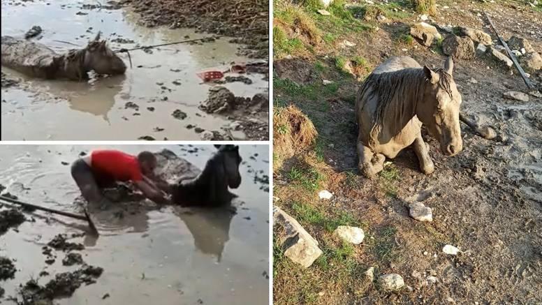 VIDEO Iz blata kod Livna spasili  ždrebicu: 'Bio je s njom u mulju dva sata dok je nije izvukao...'