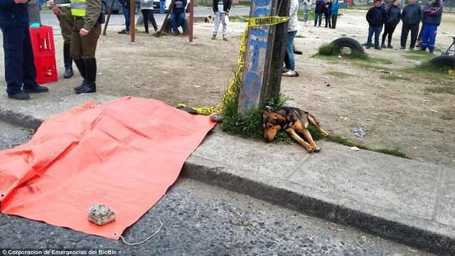 Vlasnika pregazio auto, a tužni psić se odbio maknuti od tijela