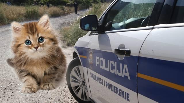 'Ubio je mačića, to je gnjusno! Više ne radi u mom restoranu'