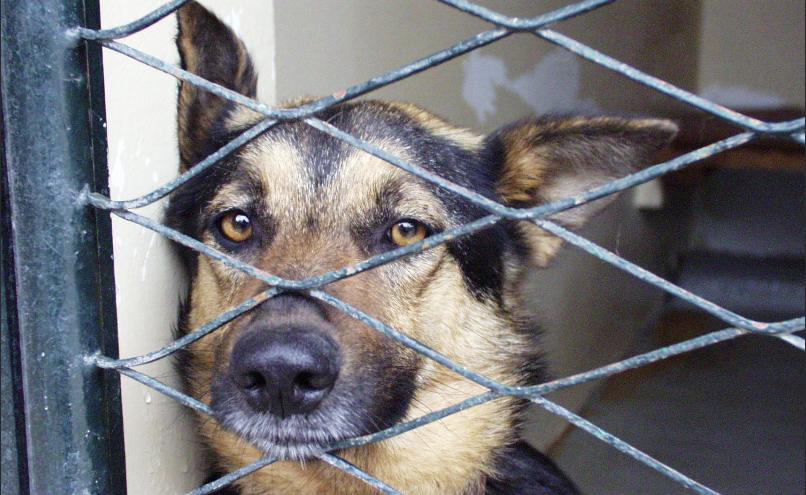 Spasili smo ih iz azila za pse, a vraćaju nam ljubav svaki dan