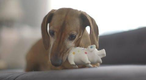 Našao najdražu igračku nakon 5 godina - pa 'popričao s njom'