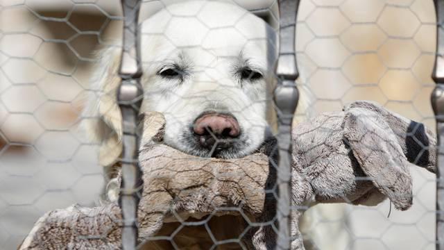 Tužni Rudijev pogled: Inače laje cijelu noć, od sinoć kad je umro Bandić, pas cijelo vrijeme šuti
