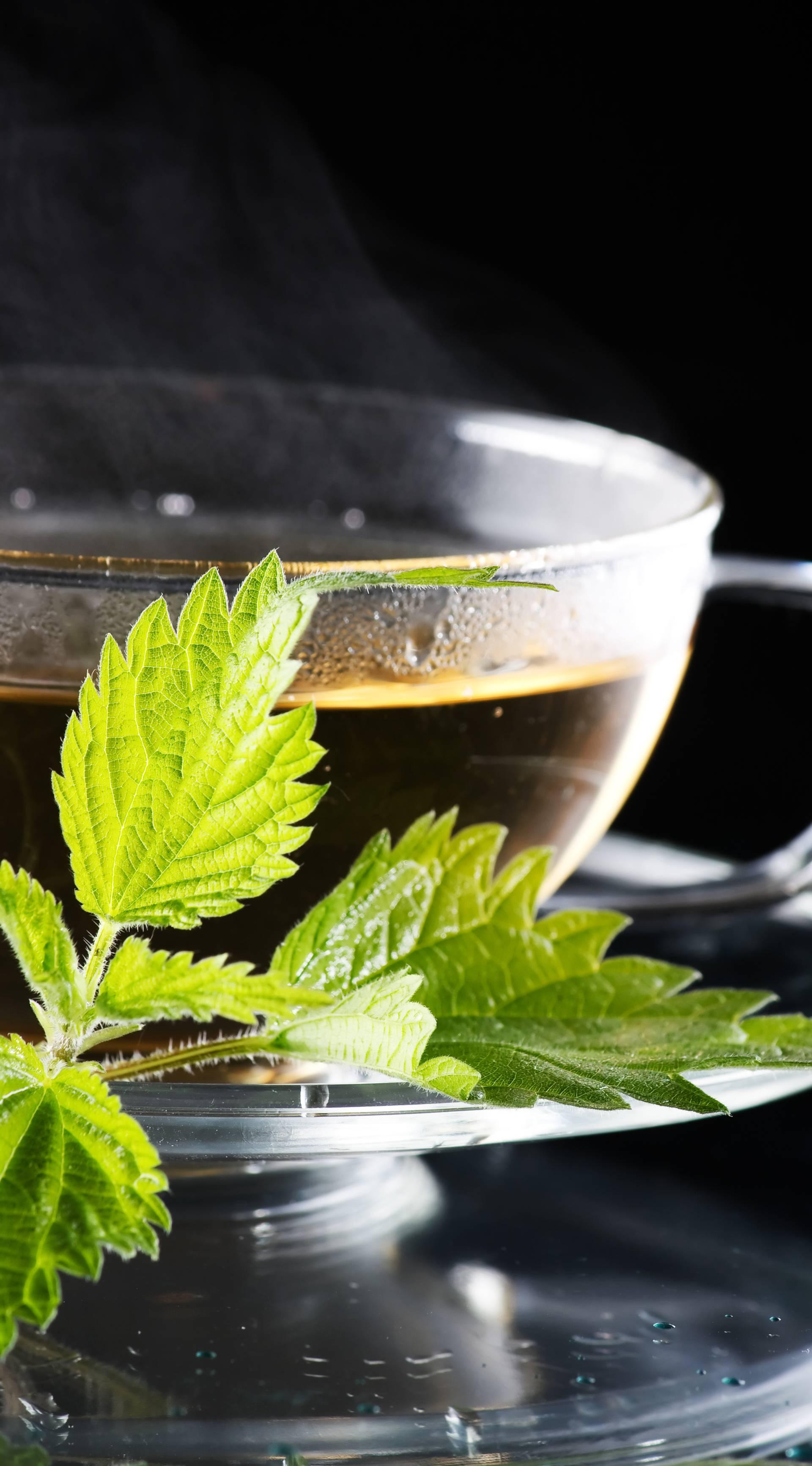 Kopriva, zlatnica, maslačak i breza imaju diuretski učinak
