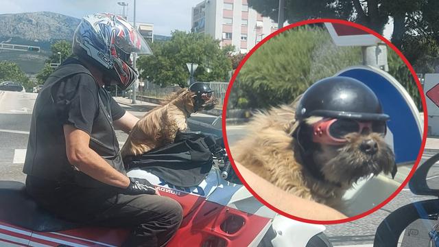 Motorist i pas postali atrakcija u Splitu: 'Svaki dan se njih dvoje voze, mališan  ima svoju kacigu'