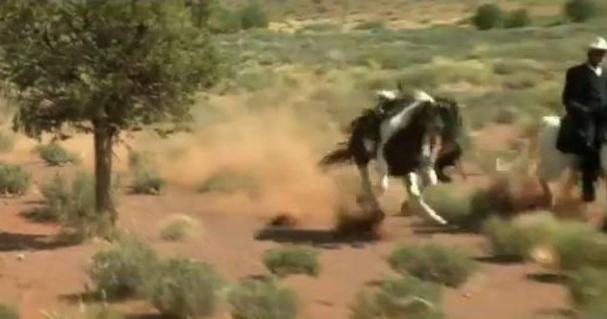 Price konj erotske Erotske price