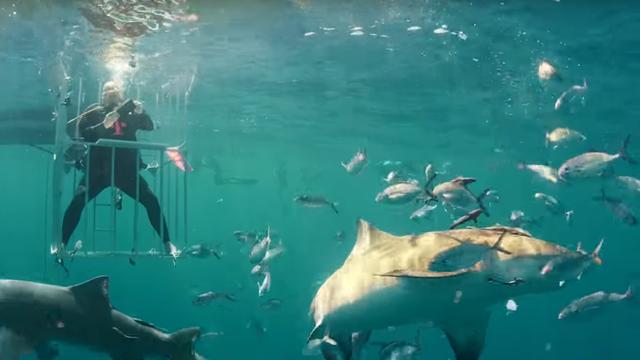 Samsung Galaxy S8 s morskim psima