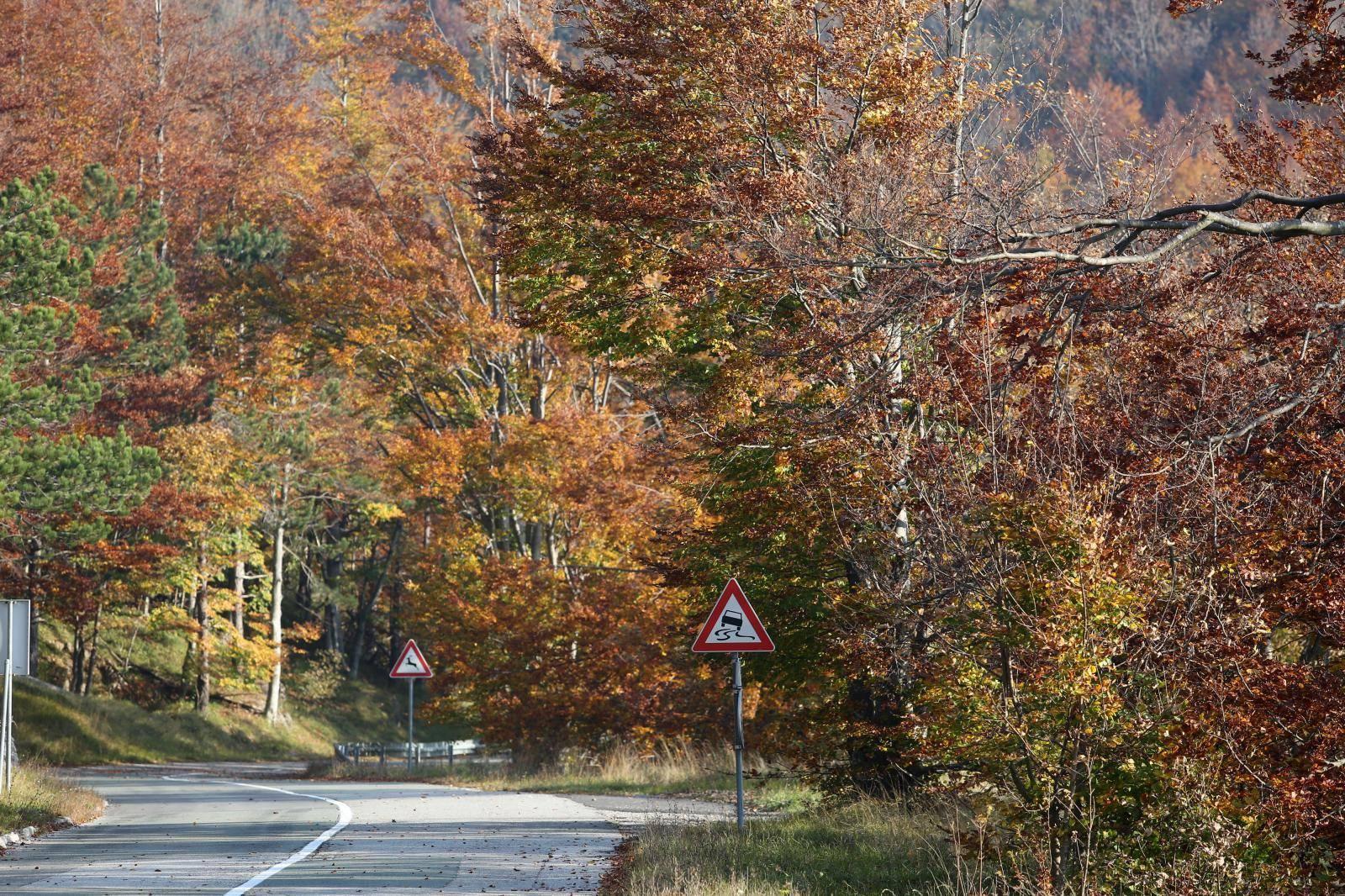 Boje jeseni u šumama Gorskog kotara
