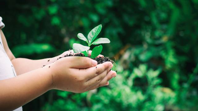 Zasadi drvo, ne budi panj: Za vikend se sadi 10.000 sadnica