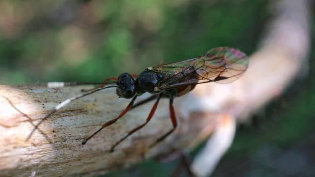Bježe kao 'vrag od tamjana': Prirodni sprej koji tjera mušice
