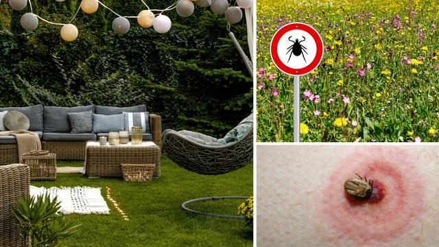 Krpelj vreba i u vašem dvorištu - evo kako se možete zaštititi