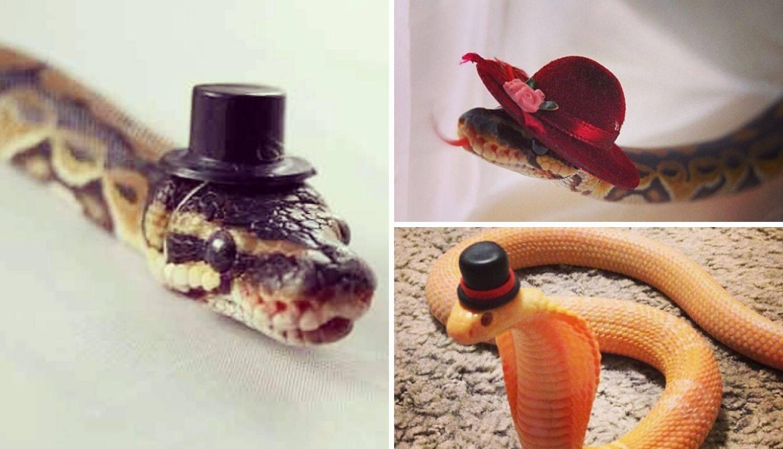 Stavili im šeširiće da postanu slatke - je li to uopće moguće?
