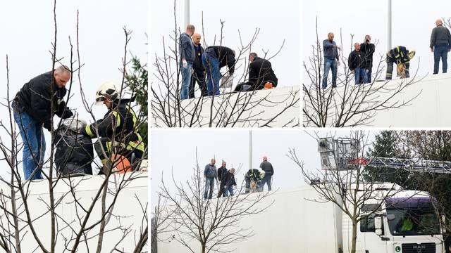 U šleperu švercali 90 kg trave: Pritvor za uhićene u Zagrebu