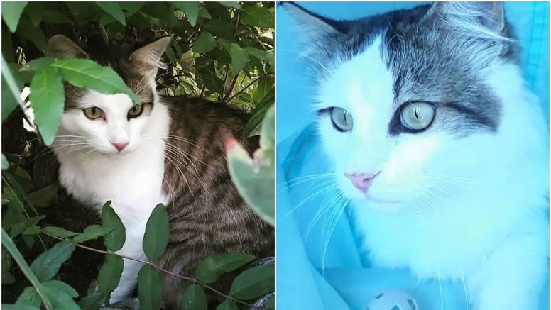 Mačak Šime predstavljat će Hrvatsku na Meowisionu 2021.