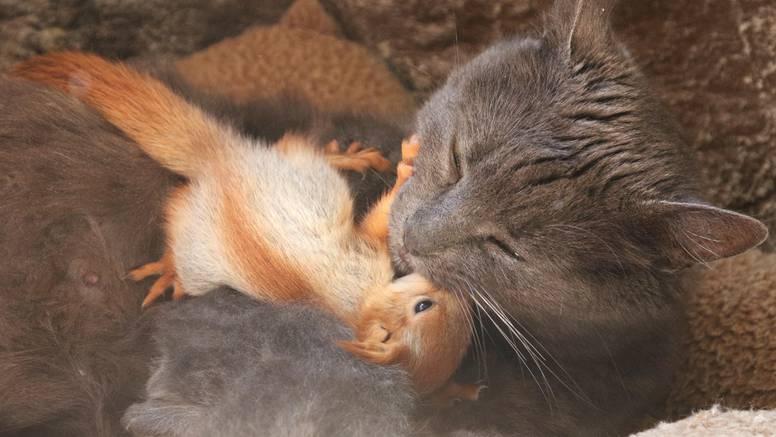 Preslatka obitelj: Maca Puša usvojila četiri male vjeverice