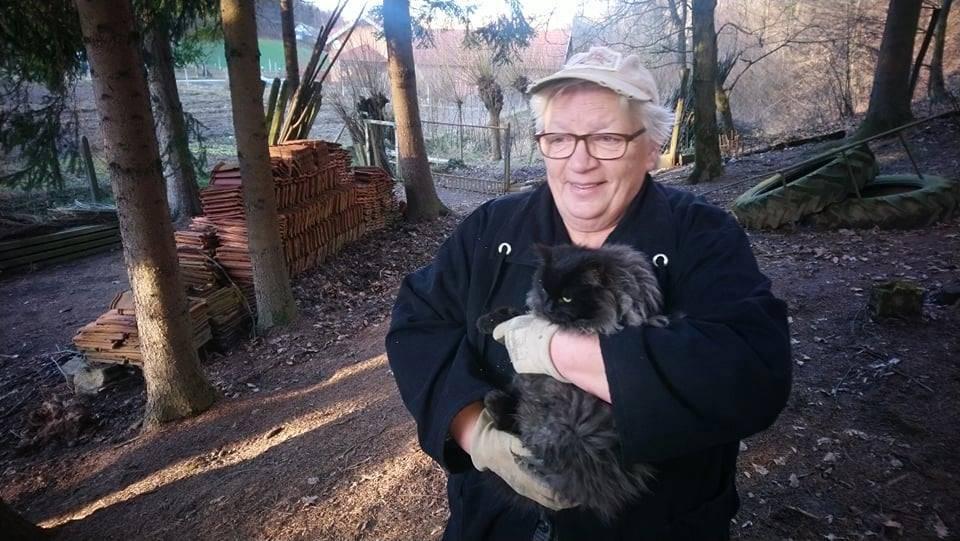 Puni perja i dlake: Sovu izvukli iz ograde, a mačka sa smreke