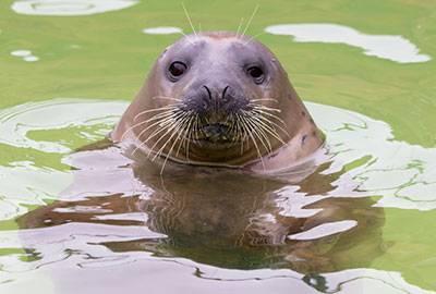 Tuljanici su uveli  strogu dijetu: 'Ajde Jinx, moraš više plivati!'